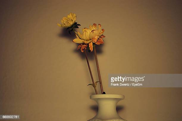 close-up of yellow flowers in vase against wall - frank swertz stock pictures, royalty-free photos & images