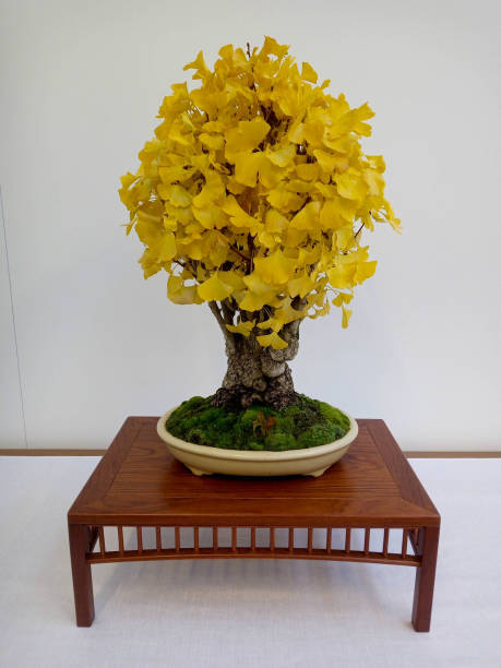 Close-up of yellow flowers on table against wall