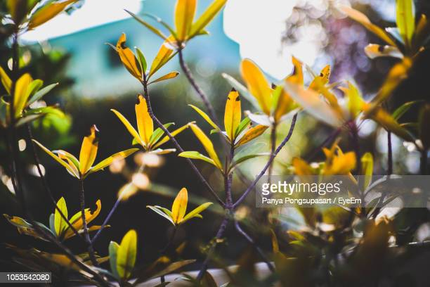 close-up of yellow flowers - day of the week stock pictures, royalty-free photos & images