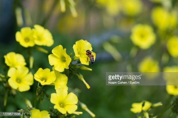 close-up of yellow flowers - noam cohen stock pictures, royalty-free photos & images
