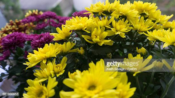 close-up of yellow flowers - keith savage stock-fotos und bilder