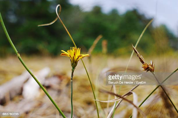 close-up of yellow flowers - barulho stock pictures, royalty-free photos & images