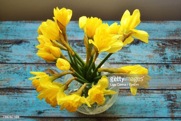 close-up of yellow flowers - liga cerina stock pictures, royalty-free photos & images