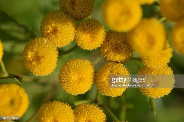 close-up of yellow flowers - flower part stock pictures, royalty-free photos & images