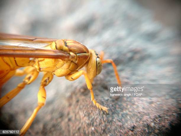 close-up of yellow insect - punjab india stock pictures, royalty-free photos & images