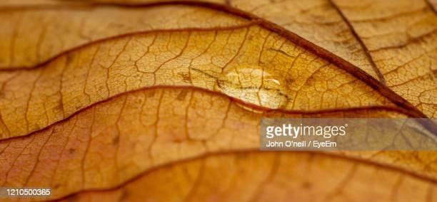 close-up of yellow leaf on dry leaves - brown stock pictures, royalty-free photos & images