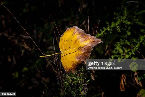 Close-Up Of Yellow Leaf On Tree In Forest