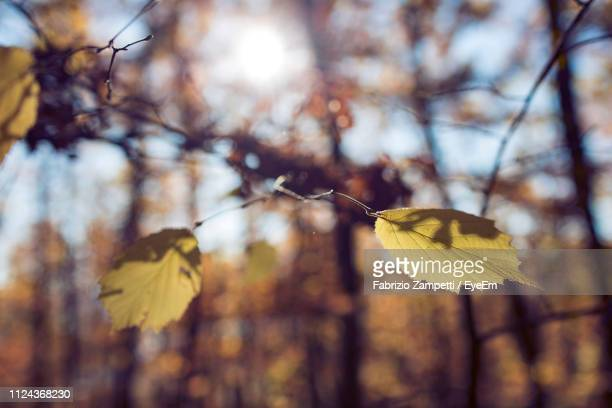 close-up of yellow leaves against blurred background - fabrizio zampetti foto e immagini stock
