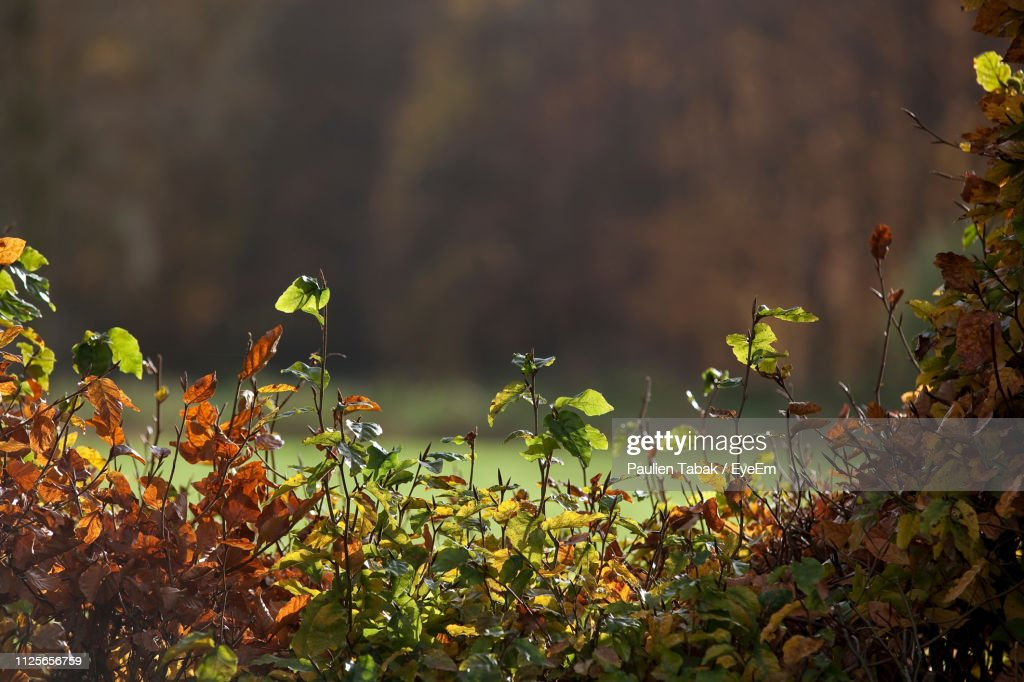 Close-Up Of Yellow Leaves On Field : Stockfoto