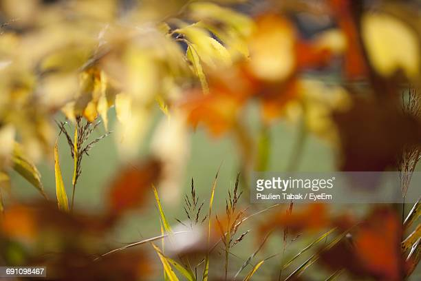 close-up of yellow leaves on plant - paulien tabak foto e immagini stock