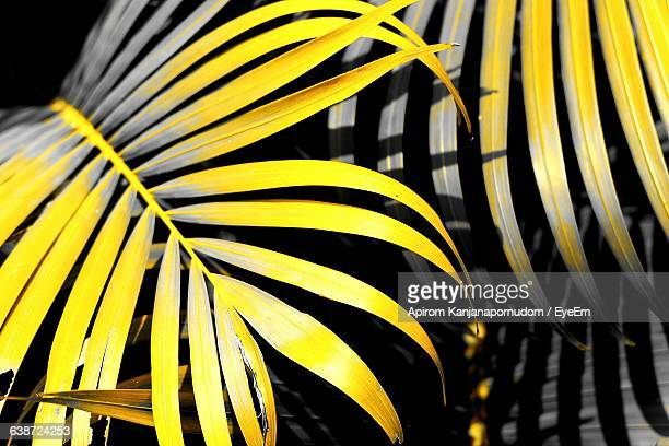 close-up of yellow leaves - isolated color stock pictures, royalty-free photos & images