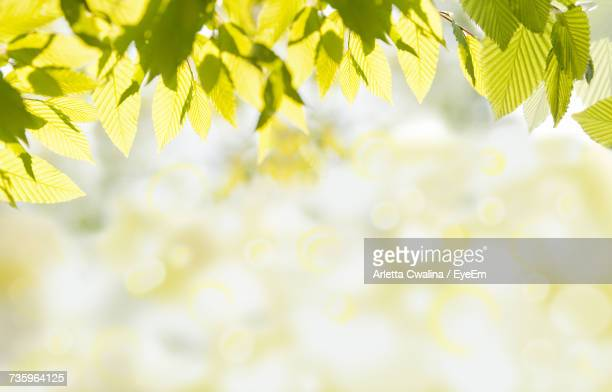 close-up of yellow leaves - elm tree stock pictures, royalty-free photos & images