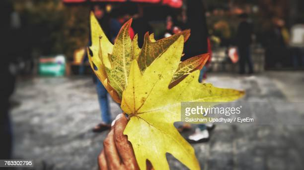 Close-Up Of Yellow Maple Leaf On Street