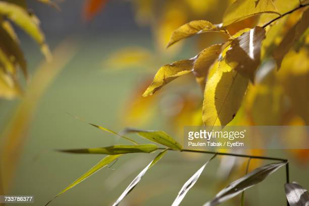 close-up of yellow plant - paulien tabak foto e immagini stock