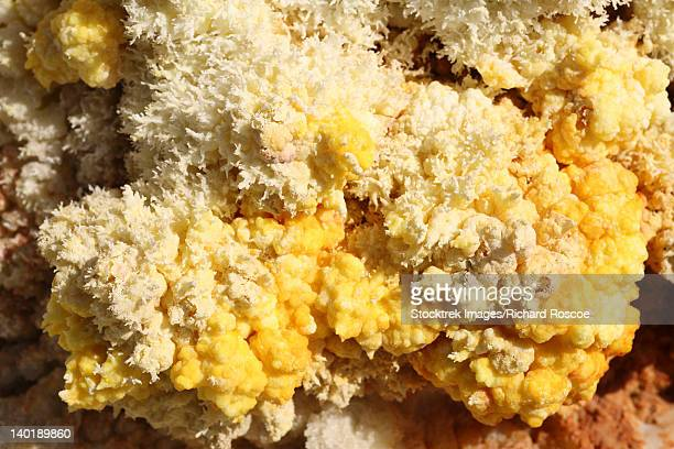 Close-up of yellow salt crystals in the Dallol geothermal area, Danakil Depression, Ethiopia.