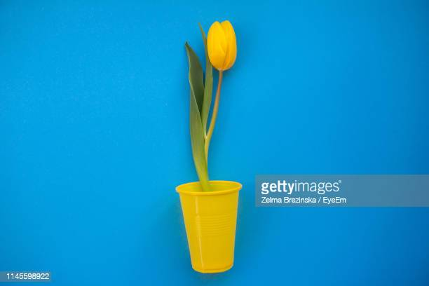 Close-Up Of Yellow Tulip Flower In Glass Against Blue Background