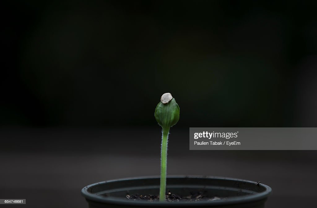 Close-Up Of Young Plant Against Blurred Background : Stockfoto