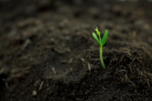 Close-Up Of Young Plant Growing Outdoors - gettyimageskorea