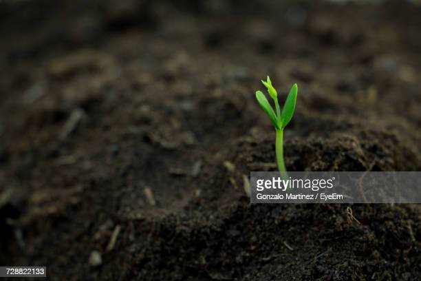 close-up of young plant growing outdoors - seedling stock pictures, royalty-free photos & images