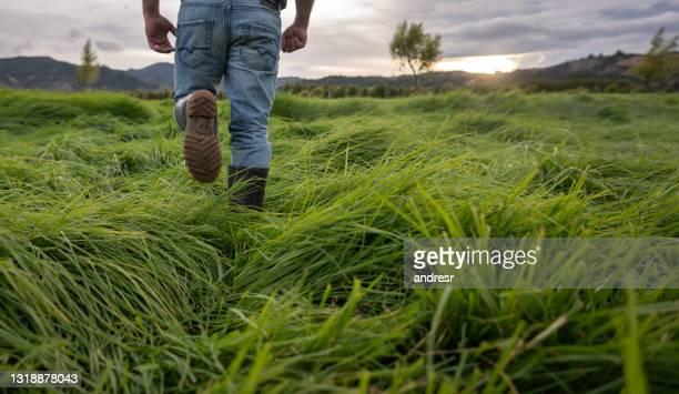 close-up op een landbouwer die bij een landbouwbedrijf werkt en rond de gebieden loopt die het gras controleren - colombia land stockfoto's en -beelden