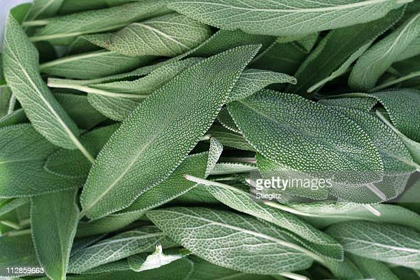 A close-up on a pile of sage leaves