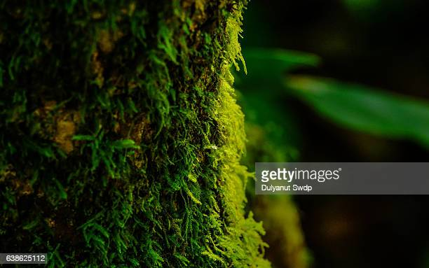 close-up on green moss. - moss stock pictures, royalty-free photos & images