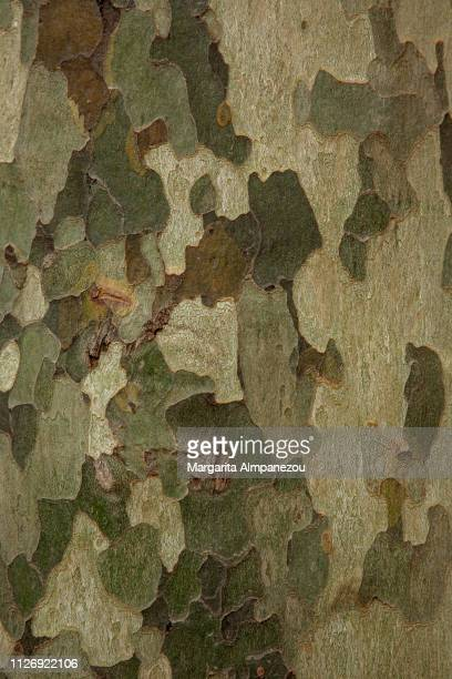 close-up on tree surface resembling military camouflage - camouflage stock pictures, royalty-free photos & images