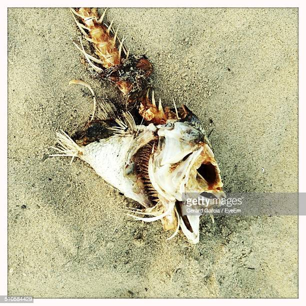 close-up overhead view of fish bone on sand - fish skeleton stock photos and pictures