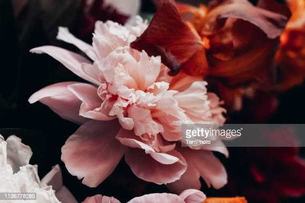 closeup peony bouquet in vintage tone - pivoine photos et images de collection