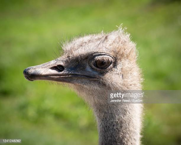 close-up portrait of a bird - jennifer reed stock pictures, royalty-free photos & images