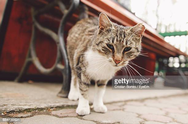 close-up portrait of a cat outdoors - bortes stockfoto's en -beelden