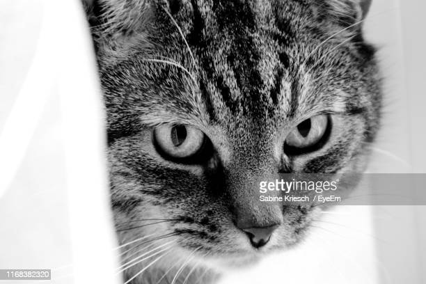close-up portrait of a cat - sabine kriesch stock-fotos und bilder