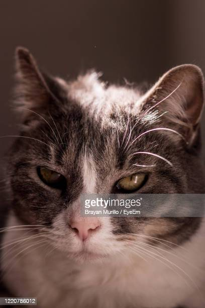 close-up portrait of a cat - ncaa stock pictures, royalty-free photos & images