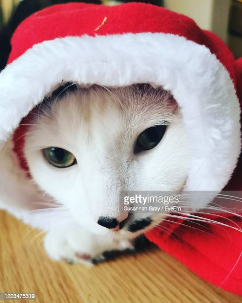 close-up portrait of a cat - cat with red hat stock pictures, royalty-free photos & images