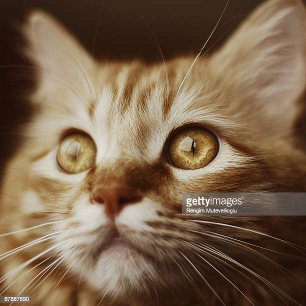 Closeup portrait of a cat