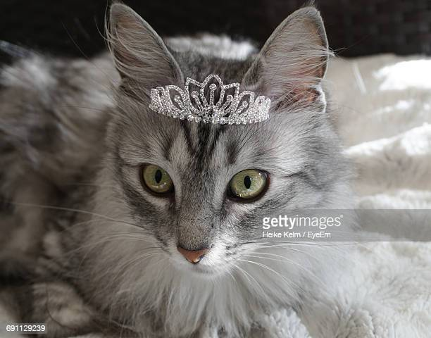 close-up portrait of a cat wearing tiara - crown close up stock pictures, royalty-free photos & images