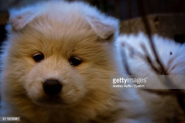 close-up portrait of a dog - andres ruffo stock pictures, royalty-free photos & images