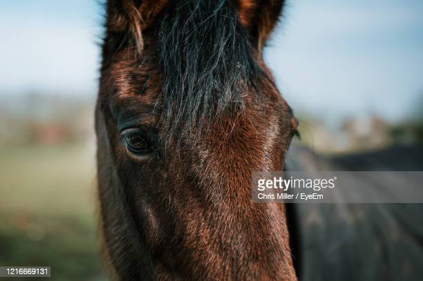 close-up portrait of a horse - animal head stock pictures, royalty-free photos & images