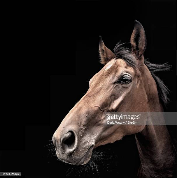 close-up portrait of a horse - wildlife stock pictures, royalty-free photos & images