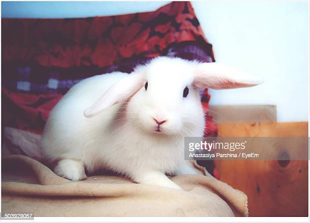Close-up portrait of a rabbit