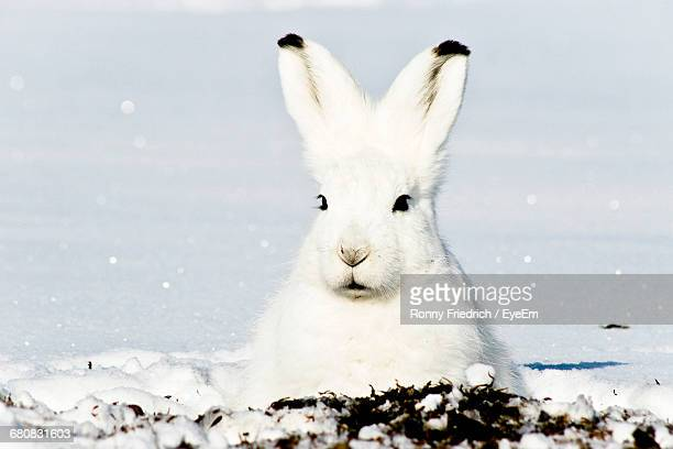 close-up portrait of a rabbit - hare stock pictures, royalty-free photos & images