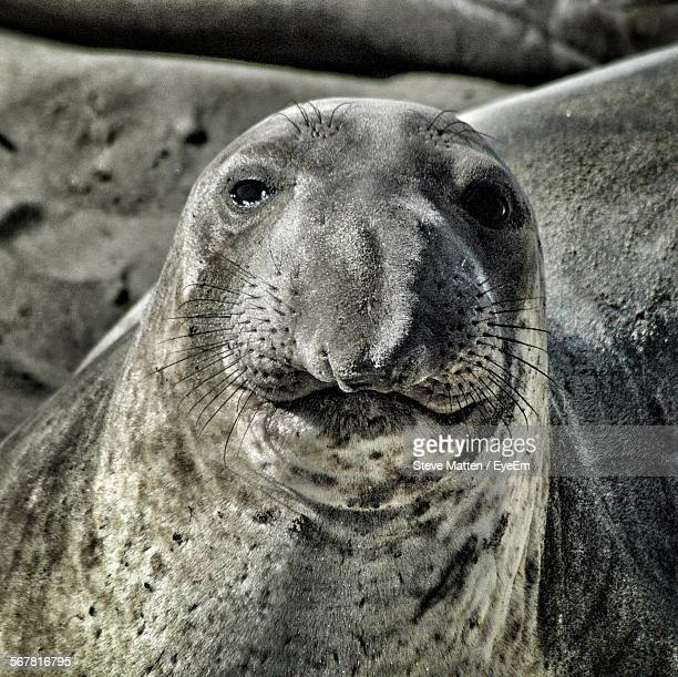close-up portrait of an animal - steve matten stock pictures, royalty-free photos & images
