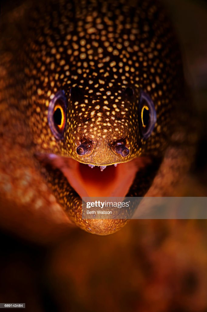 Close-up portrait of an eel : Stock Photo