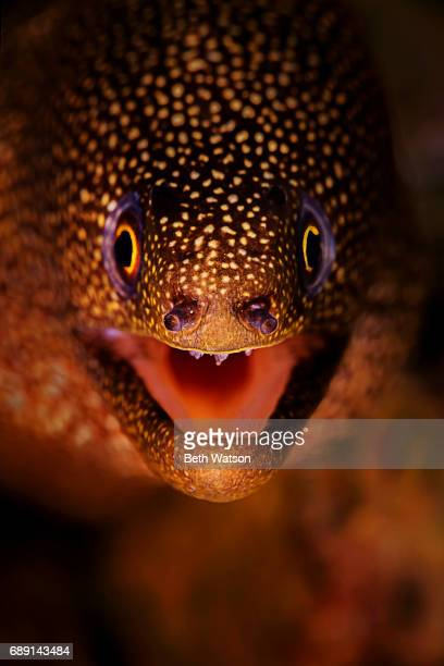 Close-up portrait of an eel
