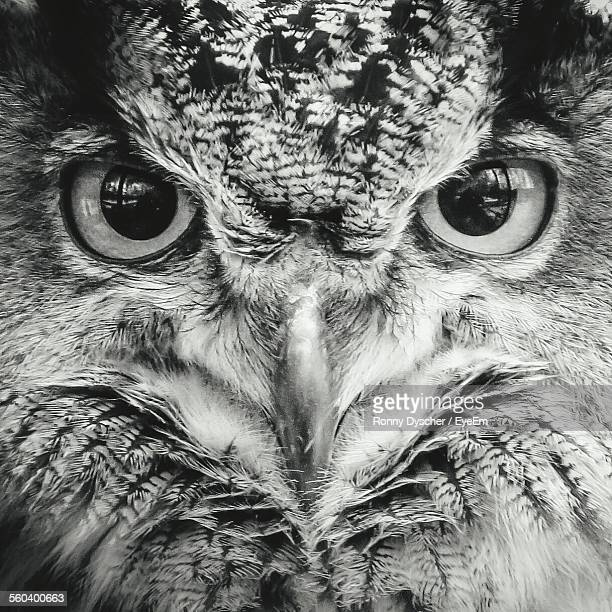 Close-Up Portrait Of An Owl