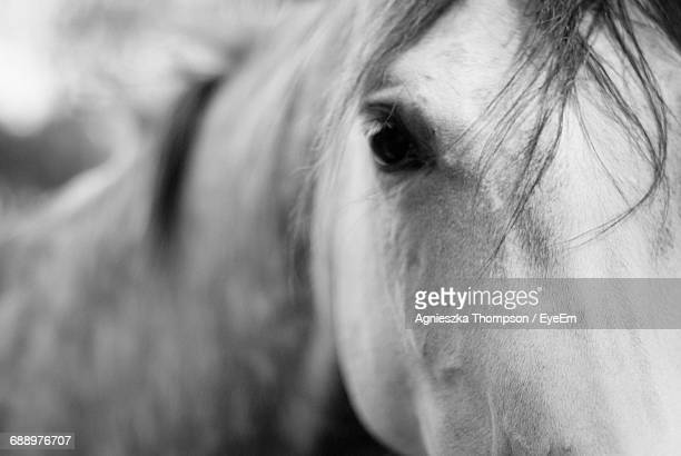 Close-Up Portrait Of Arabian Horse
