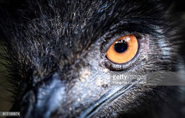 Close-Up Portrait Of Bird Eye