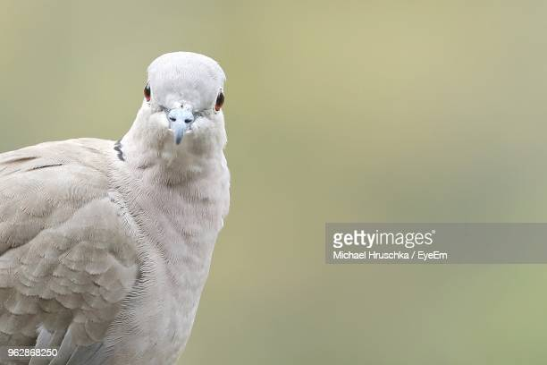 close-up portrait of bird perching outdoors - michael hruschka stock pictures, royalty-free photos & images