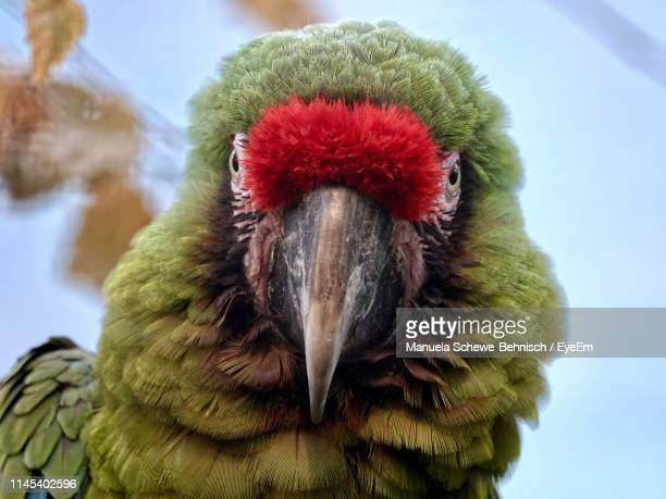 close-up portrait of bird - beak stock pictures, royalty-free photos & images