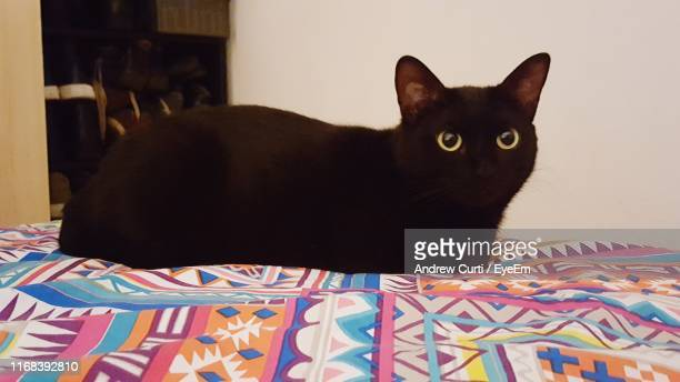 close-up portrait of black cat sitting on bed at home - black siamese cat stock pictures, royalty-free photos & images